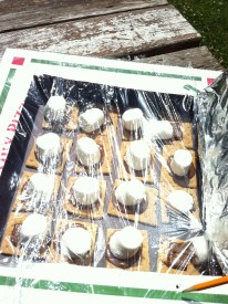 We DO promote healthy eating, but a little sweet isn't so bad, especially when there's science involved! A solar oven cooking s'mores!
