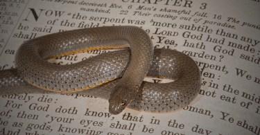 Spiritual Warfare: The Battle Between Good and Evil Part 3 of 4