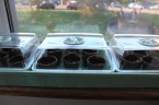 Windowsill germinator