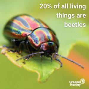 beetles20