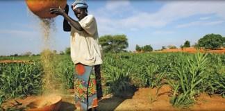 Nigeria food crisis