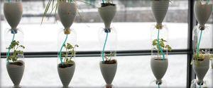growing food in cities