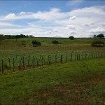Brazil farm forest