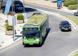 Green roof on a bus