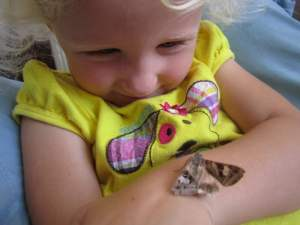 This injured moth, who the kids named Dinosaur, lived with us for 6 months. She liked to look out the window while perched on my daughter's arm and refused to go back in her enclosure when we tried to put her back.