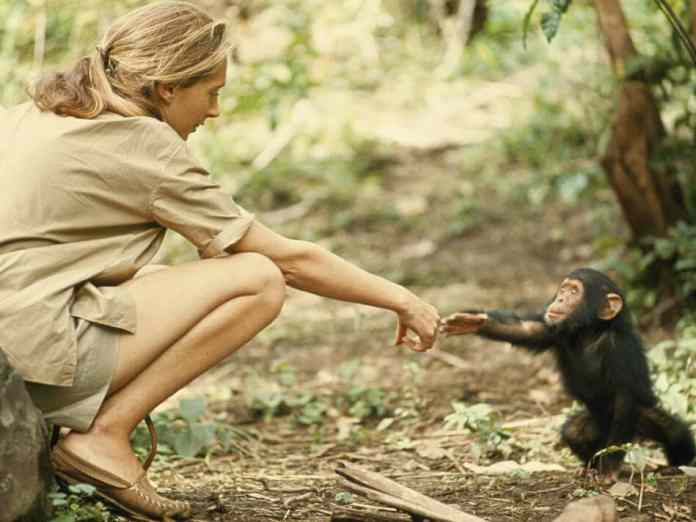 Jane Goodall with baby chimp