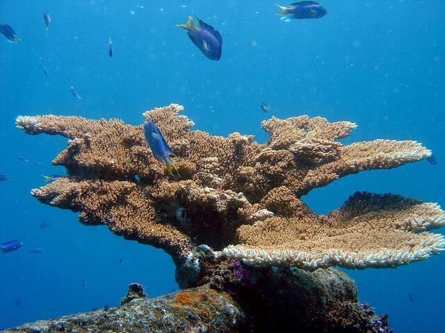 Photo via NOAA Photo Library