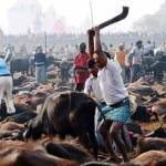 mass animal slaughter