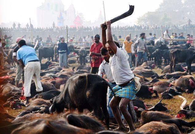 mass animal slaughter