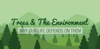 trees environment infographic header