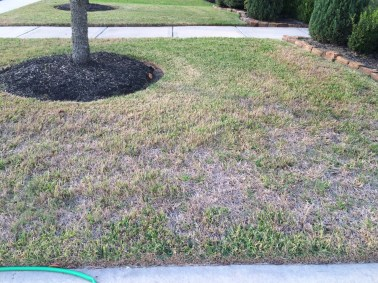 Understanding Grub Worms Greener Than Ever Lawn Care