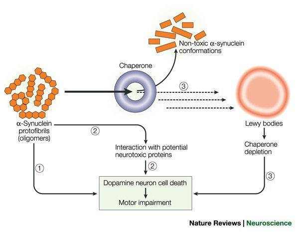alpha-synuclein and Parkinsons Disease