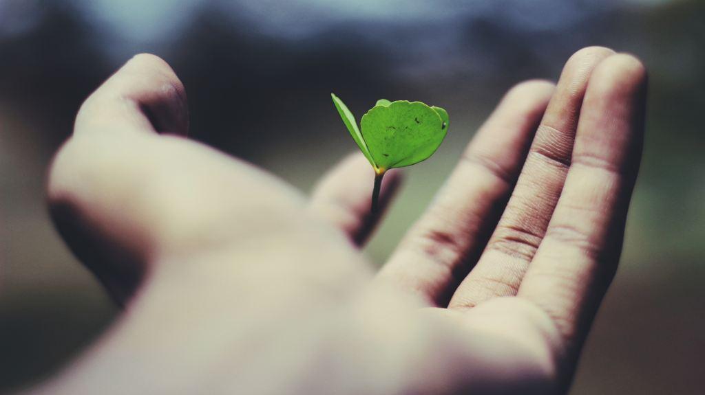 服務項目 SERVICE – 高雄心理諮商 – 綠野仙蹤心理諮商所