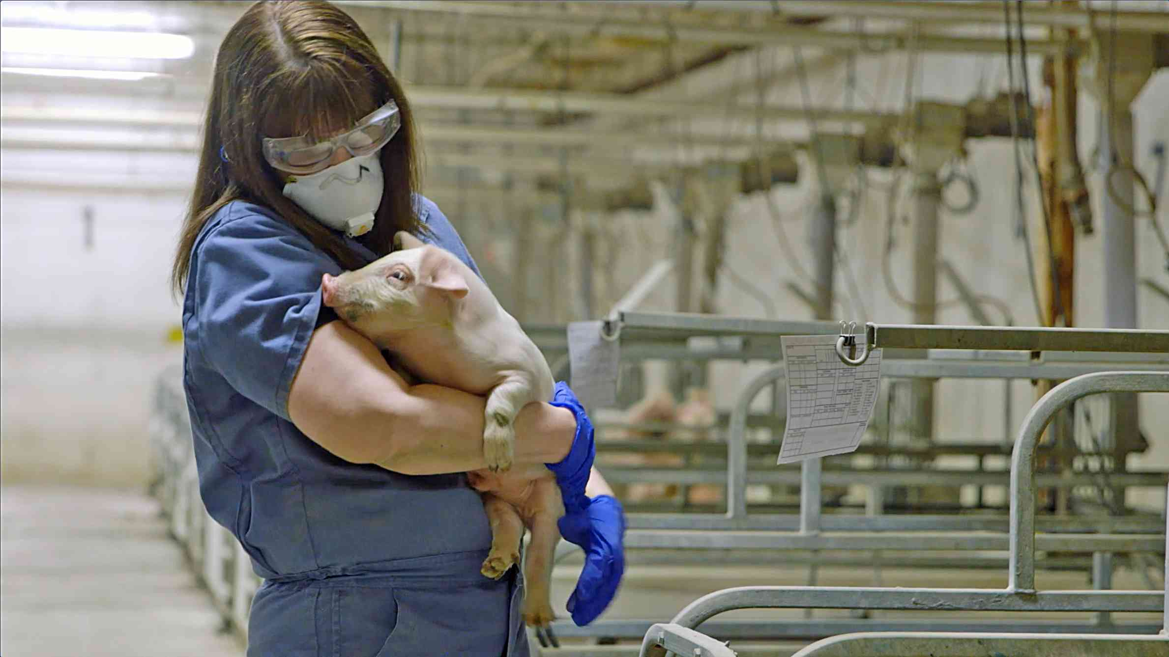 Employee holding Pig