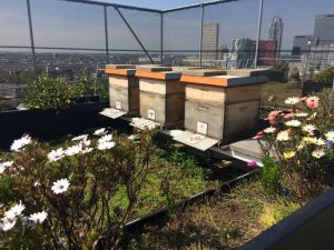los angeles cf553 843fe A beehive on the roof of your company and your own honey at lunch every  day Yes, you can! And you contribute to the biodiversity of your own city  at the ...
