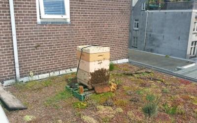Kom van dat dak af: Bijen en Sedum