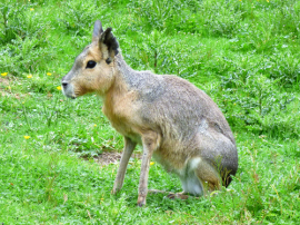Forgot the name of this animal?
