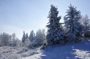 pasieka zimą 03