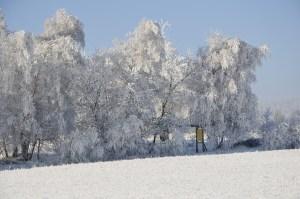 _zima 06