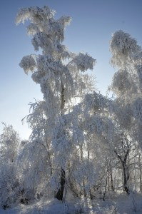 _zima 11