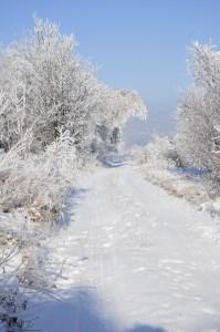 _zima 13
