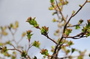 wiosna GG 05
