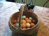 Our beautiful eggs range in size and color because we have a mixed-breed laying flock.