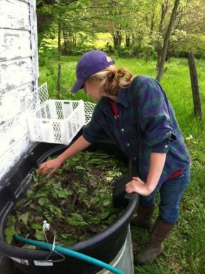 Leslie washing mustard greens early in the morning.