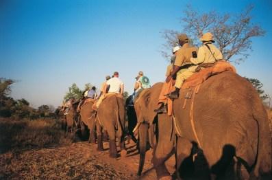 Elephant riding at Pilanesberg.