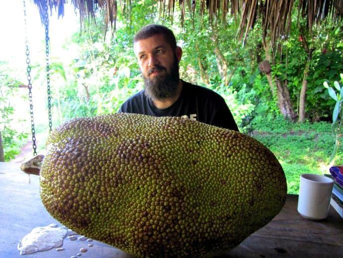 A Little Local Produce--the Jackfruit, World's Largest Fruit