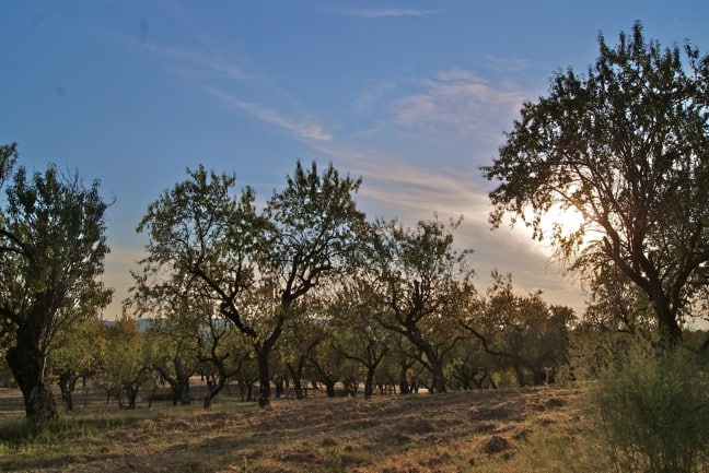 Almond Grove in Spanish Pyrenees