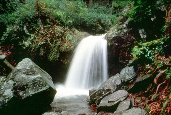 Grotto Falls near The Trillium Gap Trail - Great Smoky Mountains