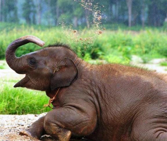 Baby Elephant at Elephant Nature Park, Thailand