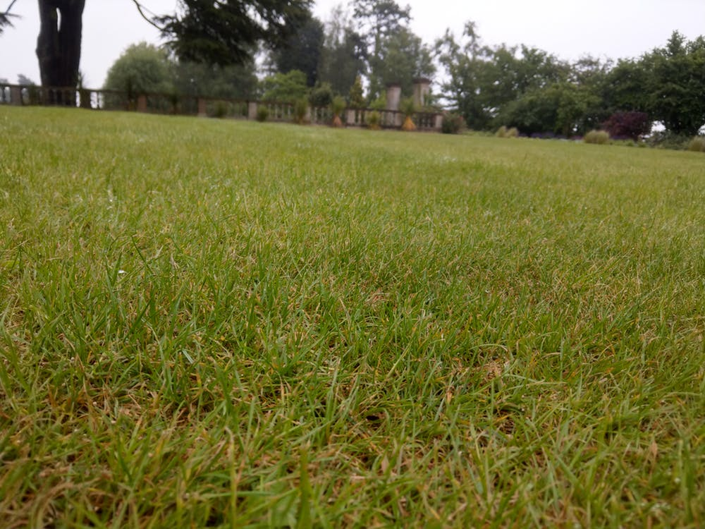 A traditionally managed lawn. There are few plant species and little structure for bugs to exploit. Adam Bates