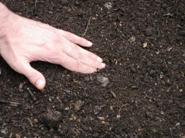 Horticutture Therapy ~ Hands and Soil