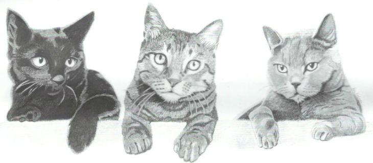 Pienso gatos natural Greenheart Premiums