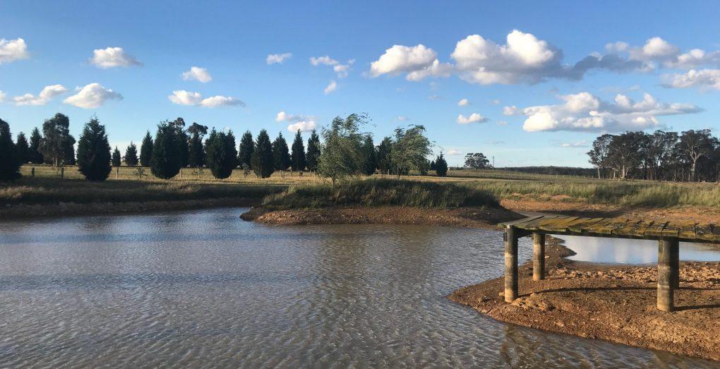 greenhills equine dam