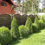 Сочетание растений в ландшафтном дизайне. - GreenhouseBay.ru