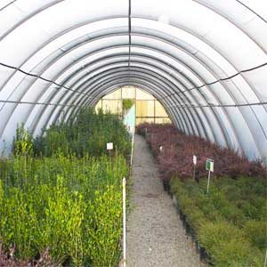 15 BEST HIGH TUNNEL WINTER CROPS featured image