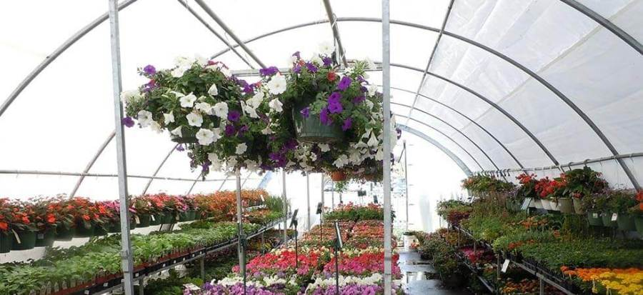 how to grow better and faster crops and plants in a greenhouse, This article is all about growing the speed of the plants in which we are growing plants