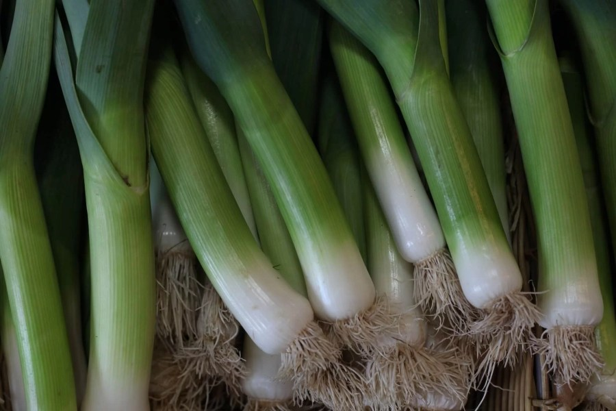 green onions crops. 15 most profitable high tunnel winter crops