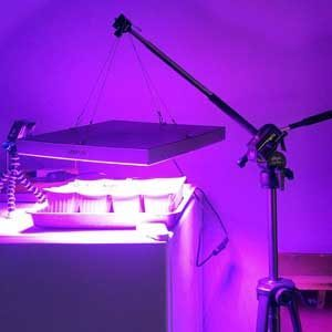 greenhouse grow lights, How to grow inside a room