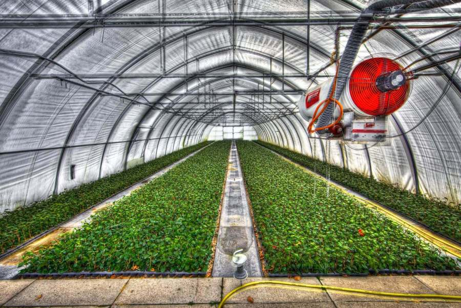 MYTHS OF GREENHOUSE GARDENING THAT ARE NOT REAL greenhouse image