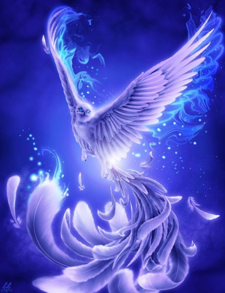 snow owl phoenix