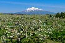 春のりんご公園