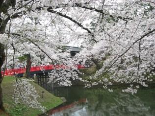 杉の大橋①