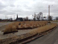 "This tallgrass ""green"" space was brand new last year and has kind of turned into a wreck since then"
