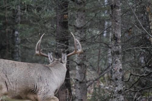 DeerPage-01