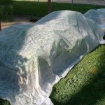 Agfabric70-2oz-13x100Super-Heavy-Floating-Row-Crop-CoverPlant-Protection-BlanketGarden-Fabric-Plant-Cover-0-0