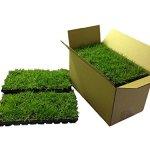 Palmetto-St-Augustine-Grass-Plugs-Box-of-72-0